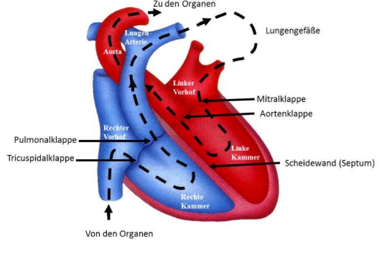 Herzmedizin.berlin - Prof. Dr. med. Dietrich Andresen